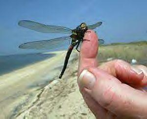 dragonfly-blog.jpg
