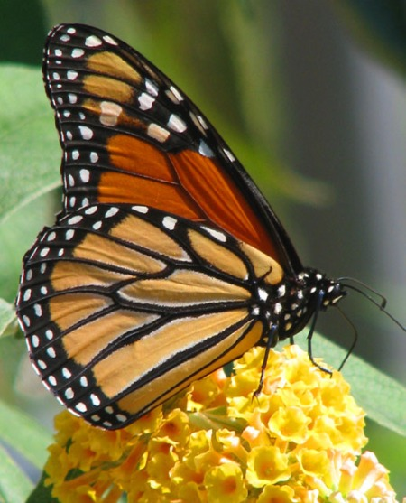 monarch-blog