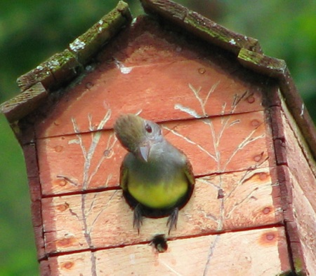 great crested flycatcher blog