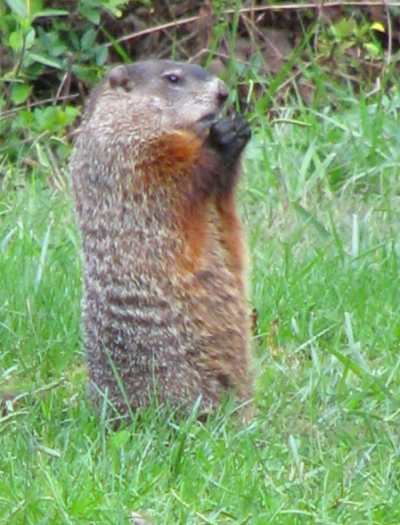 groundhog praying blog